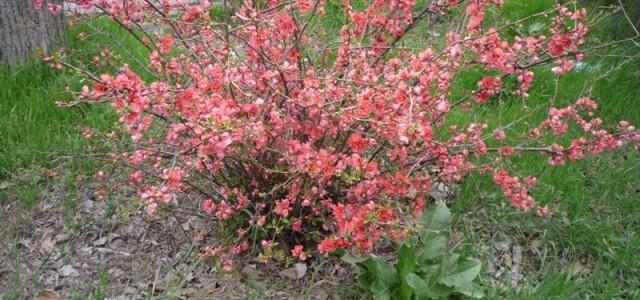 În luna februarie puteți programa primele activități de îngrijire a grădinii. Este timpul să vă pregătiți plantele ornamentale să se dezvolte pentru a vă oferi umbră și răcoare pe timp […]